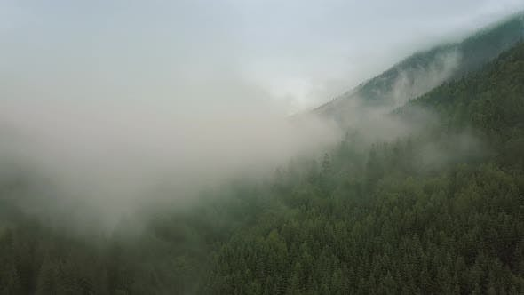 Thumbnail for Mystic and Big Foggy Drone Flight Over the Rainforest in Mountain. Middle Shot