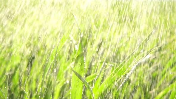 Thumbnail for Grass Rain