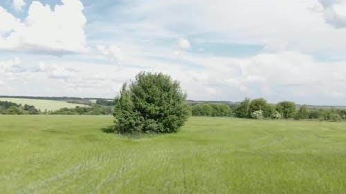 Tree on green meadow.