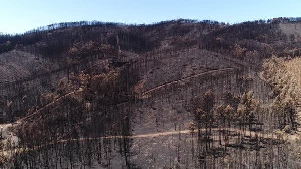 Thumbnail for Panoramic View of Burned Natural Park