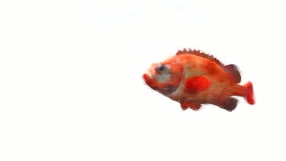 Thumbnail for Fish Art Stop Motion