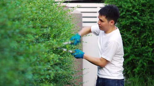 young man using big scissors cutting and trimming plant in garden at home