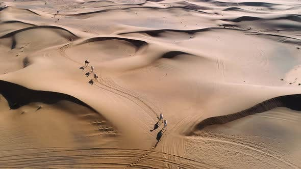 Aerial view of camels wandering together at a desert landscape, U.A.E.