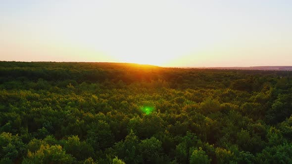 Thumbnail for Beautiful sunrise or sunset over forest