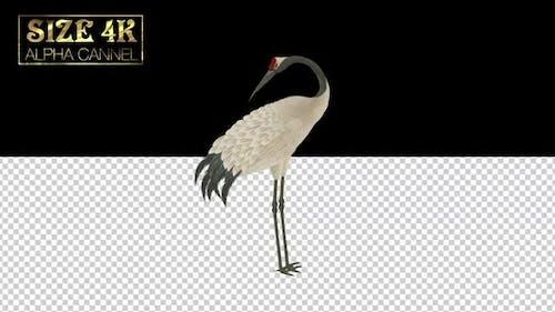 Chinese Crane Alpha 02