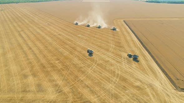 Four Harvesters Combining on a Prairie Landscape in Formation, Harvesting Wheat Field Aerial View