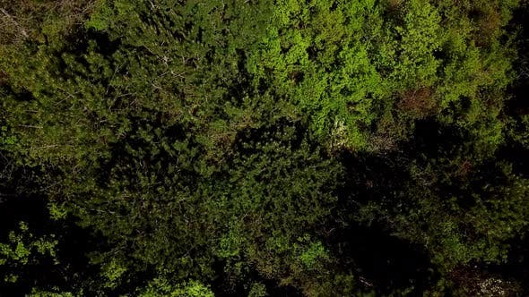 Cover Image for Directly Above View Flying Forward Above Beautiful Green Forest