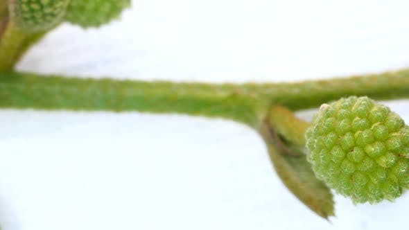 Thumbnail for Detailed Analysis of a Plant Germ