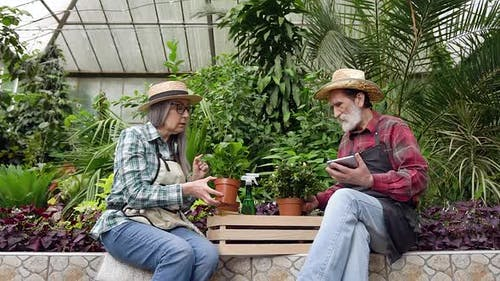 Man and Woman which Working in Beautiful Glasshouse and Calculating Seedlings