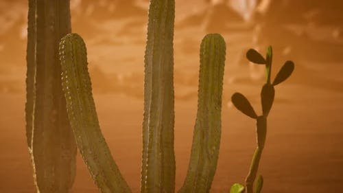 Arizona Desert Sunset with Giant Saguaro Cactus
