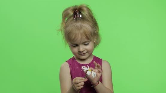 Girl Holds Chamomile Flower and Tells Something. Happy Little Child. Chroma Key