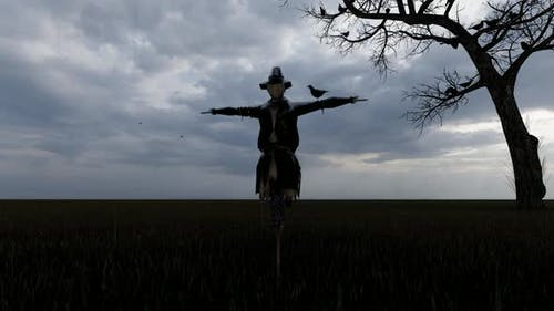 Scarecrow and Fearless Bird Standing on it