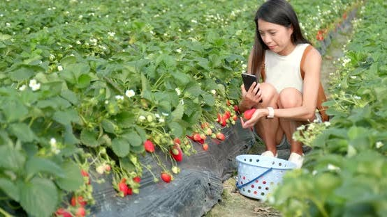 Thumbnail for Woman picking strawberry field