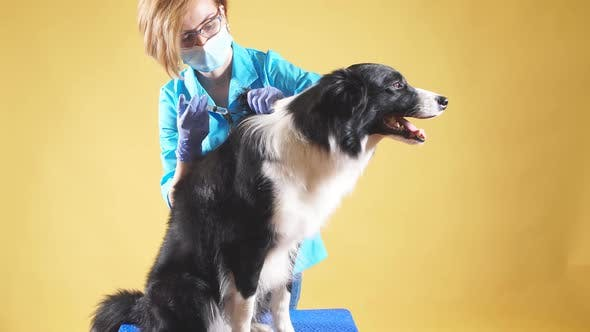 Thumbnail for Blond Vet Anesthetizes a Dog By an Injection