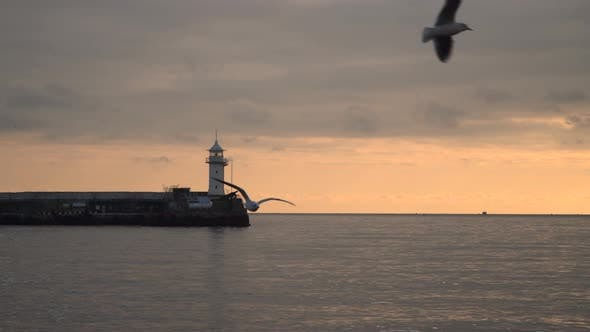 Thumbnail for Lighthouse Against the Evening Sky  Visible Flying Seagull