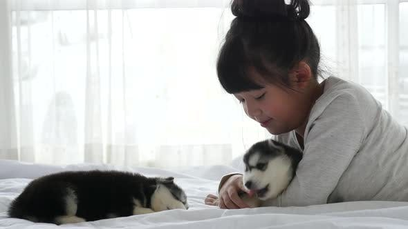 Asian Girl Lying With Two Siberian Husky Puppies On Bed