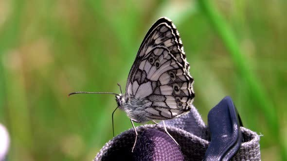 A close-up of a butterfly in this summer meadow.