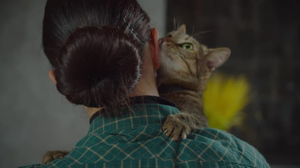 Cute Shorthair Cat Rubbing Against Owners Face