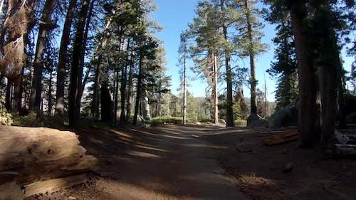 Spaziergang durch den schönen Wald im Yosemite-Nationalpark, Kalifornien, USA