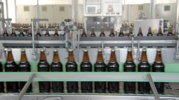 Thumbnail for Workshop of Beer Factory, Bottles with Drink Are Moving on Conveyor Belt, Bottling