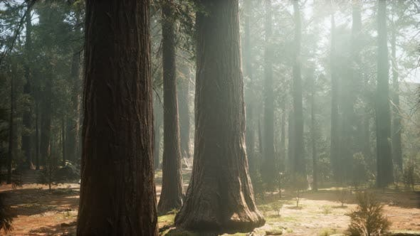 Thumbnail for Sunset on the Giant Forest Sequoia National Park California