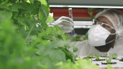 Agroengineer Doing Research On Lettuce Seedlings