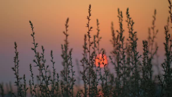 Thumbnail for Red Evening Sun, View Through the Grass