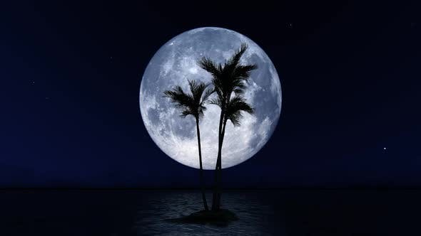 Big Moon and Palm Tree