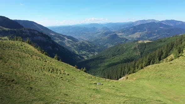 Thumbnail for Flying Above Alpine Meadow and Pine Forest in the Carpathians