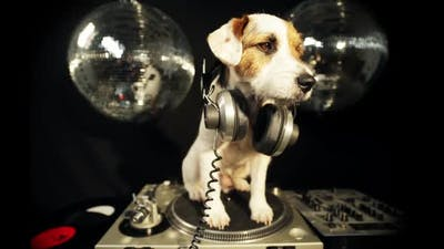 dog disco puppy animal pet funny party music doggy