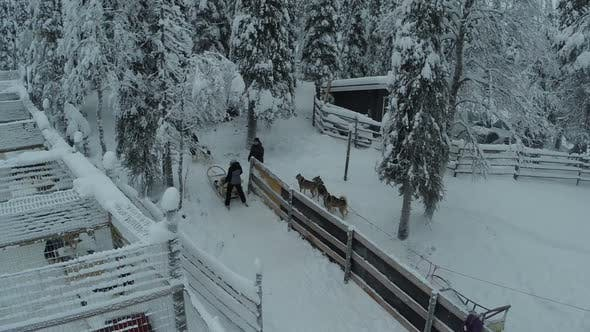Riding at Dog Sledge in Winter Woods, Aerial View