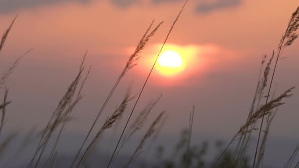 Thumbnail for Panoramic Sunset over Grass