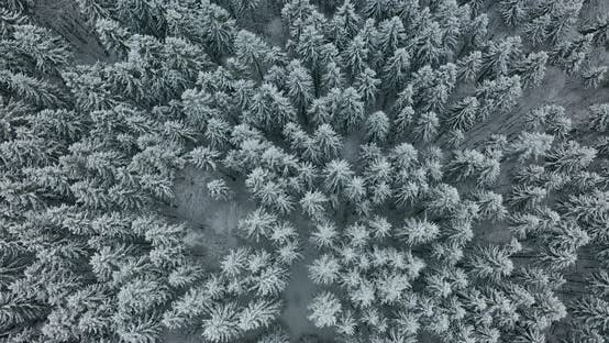 Thumbnail for Aerial View. Winter Season. Snowy Mountain Forest Aerial Shot Breathtaking Natural Landscape, Frozen