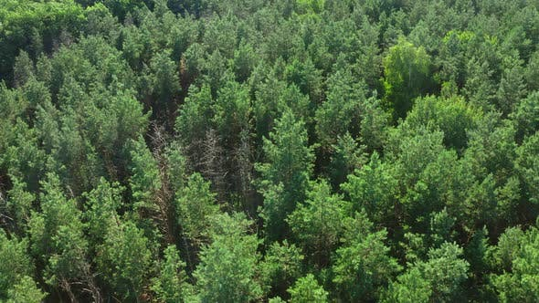 Cover Image for Top View On Trees In The Forest