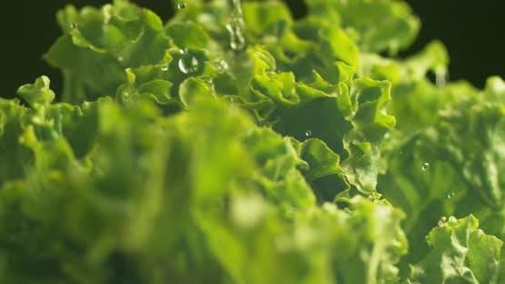 Water splashing onto lettuce in super slow motion.  Shot on Phantom Flex 4K high speed camera.