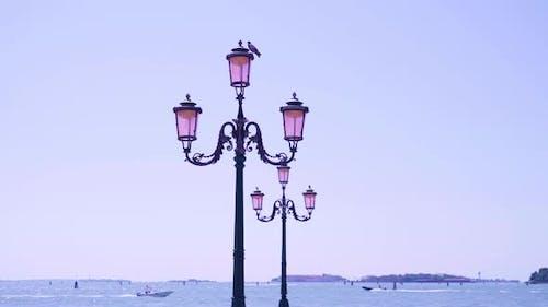 Pigeon Sits on Triple Streetlight on Waterfront in Venice