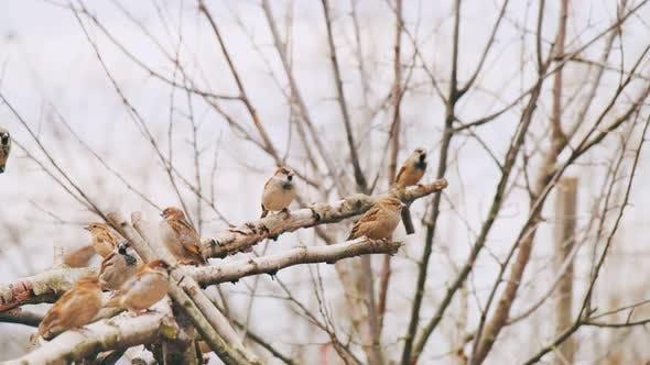 Thumbnail for Birds