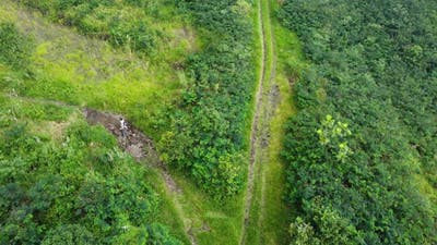 Drone Footage People Walking in Green Forest