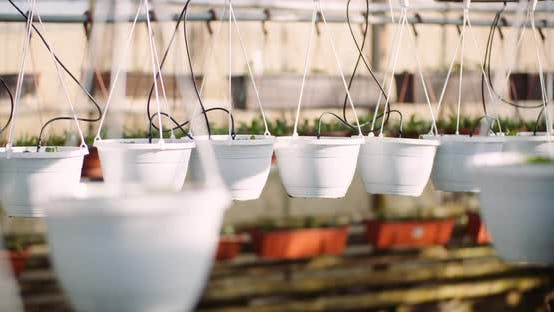 Thumbnail for Agriculture - Flower Seedlings in Greenhouse