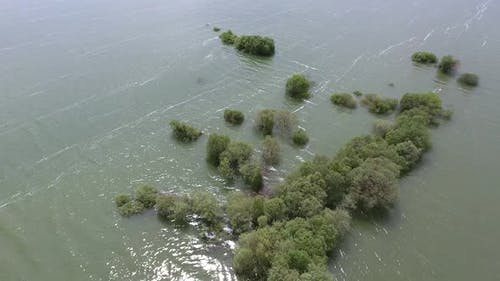 Trees in Flood With Rising Water Level