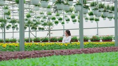 Woman Walking in Large Modern Greenhouse Near Flowers