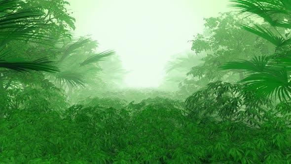 Jungle 02 Hd