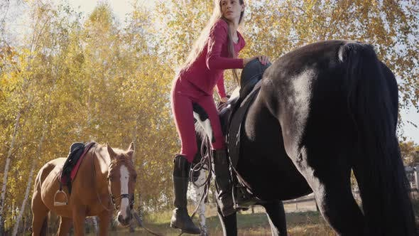 Thumbnail for Young Caucasian Woman Saddling Black Graceful Horse, Turning To the Camera and Smiling