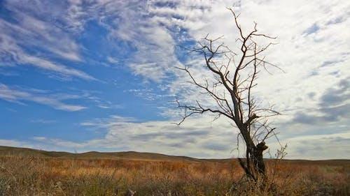 Toter Baum gegen bewölkten Himmel