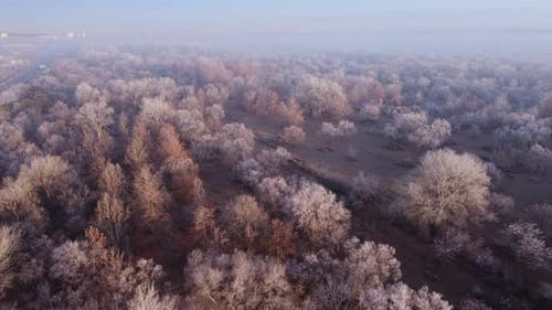 Frozen Forest In The Winters Foggy Morning