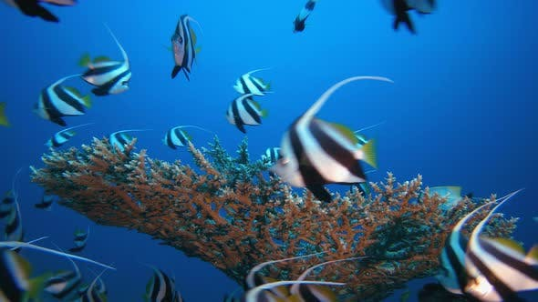 Cover Image for Underwater Marine Life Fish