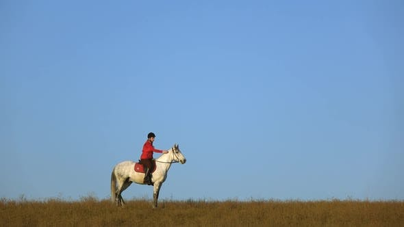 Cover Image for Girl Riding a Horse Strokes a White Horse Standing in the Field