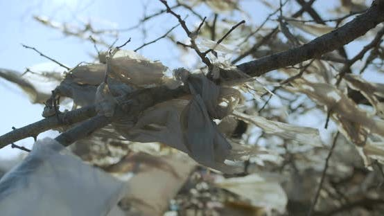 Thumbnail for Remnants of White Plastic Bags on the Branchs Are Swaying in the Wind.