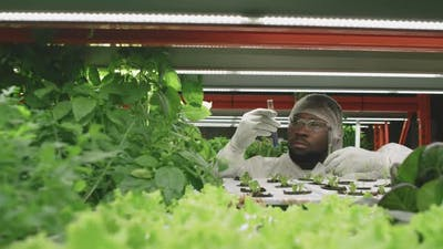 Agronomic Engineer Doing Scientific Research