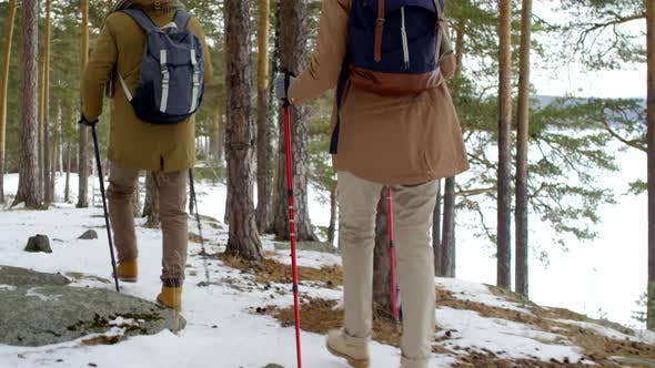 Thumbnail for Fit Elderly Couple Hiking with Walking Poles in Snowy Forest